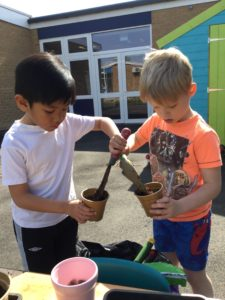 Planting Bean Seeds in Year 2