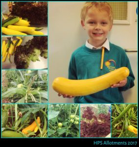 Well Done Year 3. A bumper harvest!